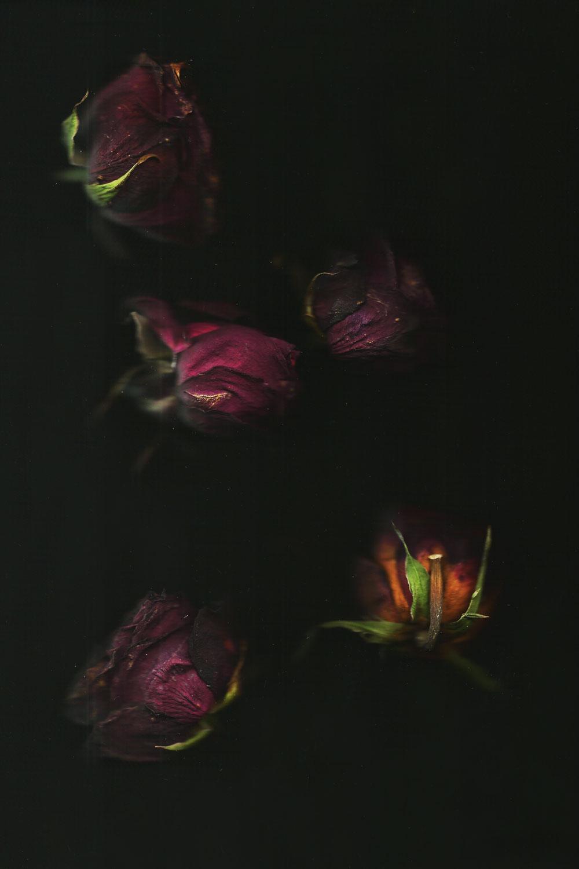 Flowers_Roses
